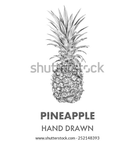 Sketch of pineapple. Hand drawn vector illustration. Fruit collection. - stock vector