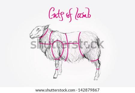 Sketch of SHEEP / Cuts of lamb meat - stock vector