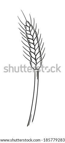 sketch of the barley on white background, isolated - stock vector