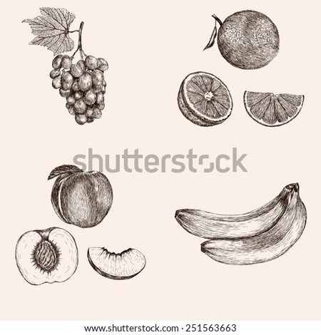 Sketch of the whole orange and peach, half and segment,cluster grapes and banana. Hand drawn vector illustration. Fruit collection. - stock vector
