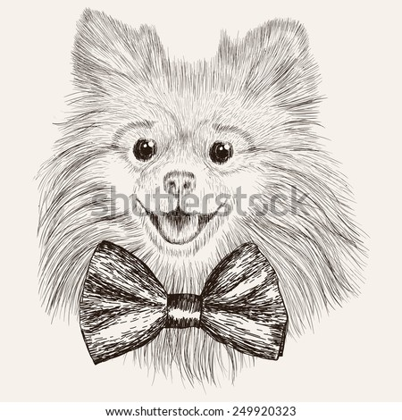 Sketch Spitz with bow tie. Hand drawn dog illustration. - stock vector
