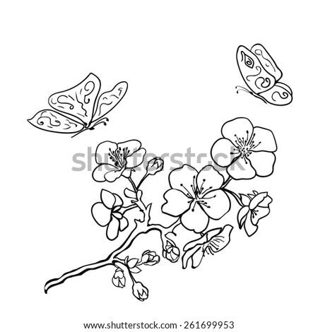 Sketch. Twig sakura blossoms. Vector illustration - stock vector