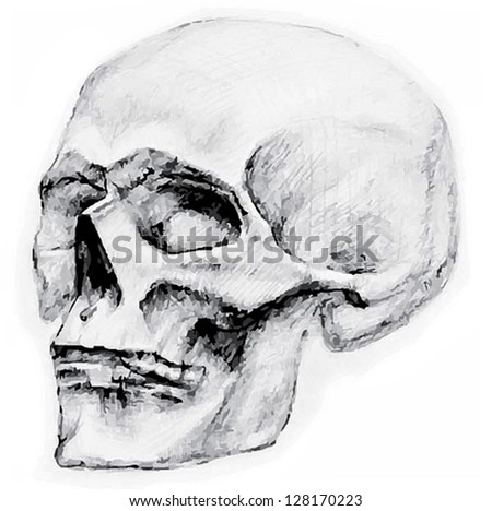skull pictured is chrnym and white graphically in a turn of the head with large eyes and contrasting the shadows and the light on a white background - stock vector