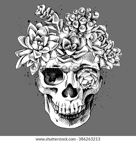 Skull with the succulent plants. Vector illustration. - stock vector