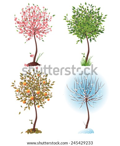Small tree in 4 different seasons - stock vector