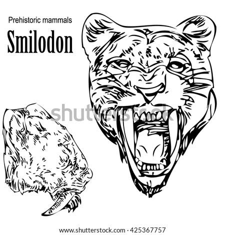 Smilodon Stock Photos Images