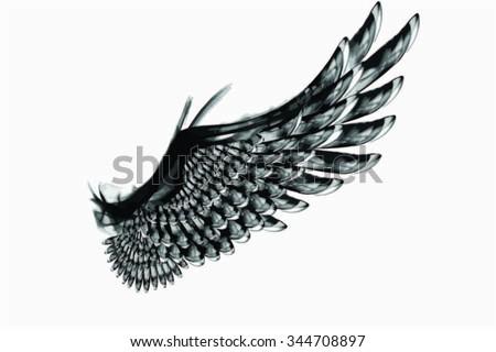 Smoky Vector Black Wing - stock vector