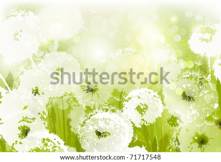 some white dandelions on the  glade - stock vector