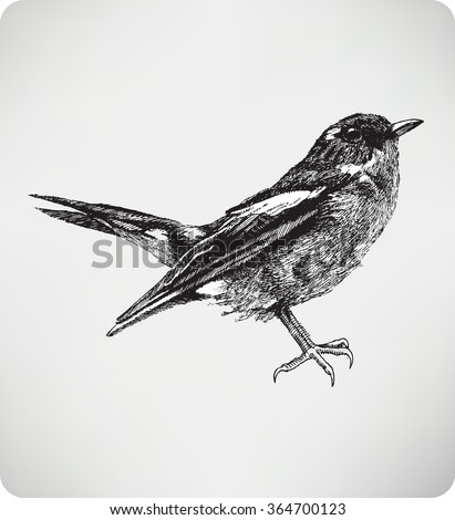 Songbird, hand drawing, vector illustration. - stock vector