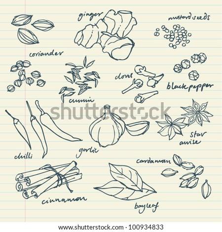 Spices doodles vector set - stock vector