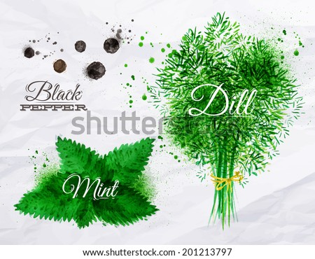 Spices herbs set drawn watercolor blots and stains with a spray black pepper, mint, dill - stock vector