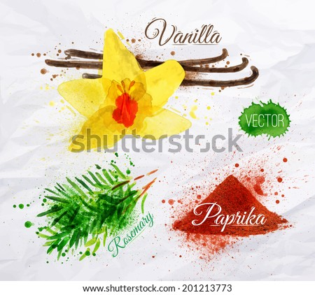 Spices herbs set drawn watercolor blots and stains with a spray vanilla, rosemary, paprika - stock vector