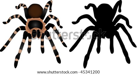 Spider Silhouette 1 - stock vector