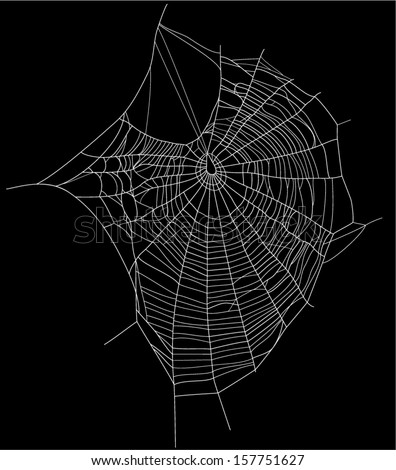 spider web detailed vector illustration - white threads over white - stock vector
