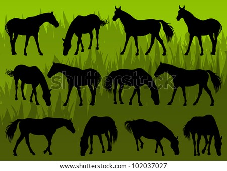 Sport and farm horse detailed silhouettes illustration collection background vector - stock vector