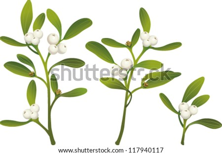 Sprigs of mistletoe - stock vector