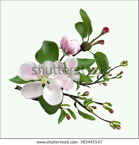 Spring flowers on an apple-tree branch. Vectorial illustration. - stock vector