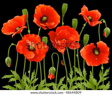 Spring flowers: poppy - stock vector