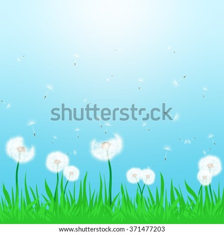 Spring landscape with flowering white dandelion being blown in the wind with green grass and sun shine with a blue sky - stock vector
