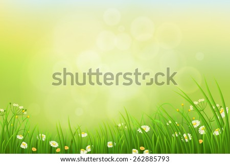 Spring nature background with green grass, herbs  and flowers - stock vector