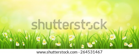 Spring sunny meadow with green grass and daisies - stock vector