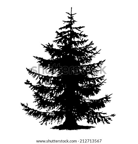 Spruce full size tree isolated rough silhouette, vector - stock vector