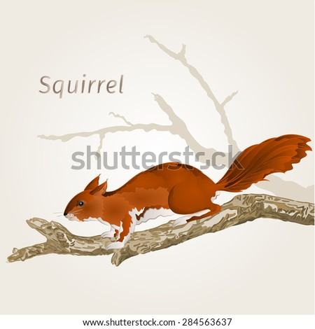 Squirrel on an old tree natural rodent vector illustration  - stock vector