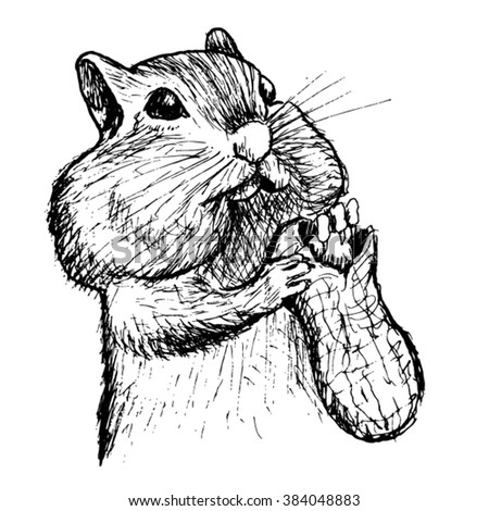squirrel sketch - vector - stock vector