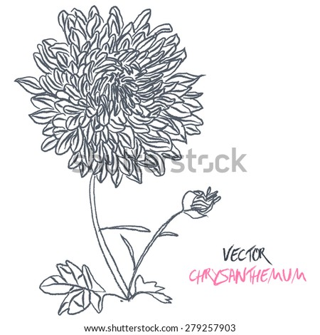 Stock Vector Illustration: set of black and white isolated vector chrysanthemum flower blossoms. Cool for t-shirts, tattoos and design. - stock vector