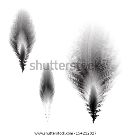 Stock vector illustration with light black feathers isolated - stock vector