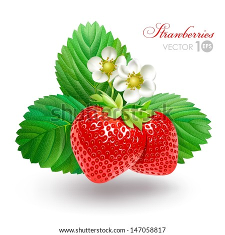Strawberry with leaves and flowers. Vector Eps 10. - stock vector