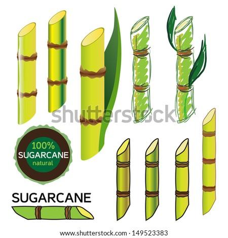 Sugarcane set in vector - stock vector