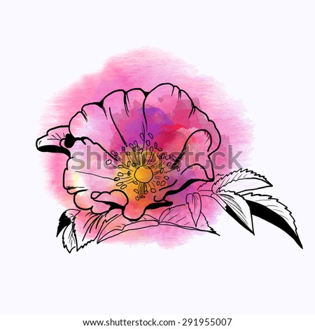 Summer pink flower, watercolor illustration, with elements of the sketch. EPS 10 - stock vector