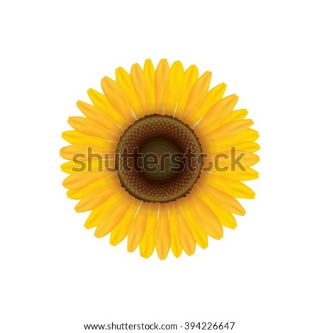 Sunflower. Summer flower isolated. Vector illustration - stock vector