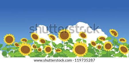 Sunflower vector background - stock vector