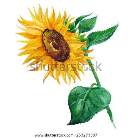 sunflower vector flower pedicle nature illustration yellow summer bright natural flora beautiful - stock vector