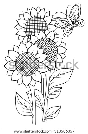 coloring pages of realistic sunflowers | Sunflower Vector Stock Photos, Images, & Pictures ...