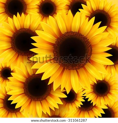 Sunflowers background, vector illustration. - stock vector