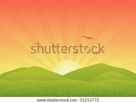 Sunrise over field. Vector illustration. - stock vector