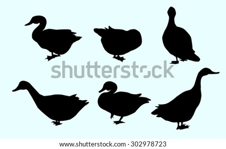 Swans Vector Set - stock vector
