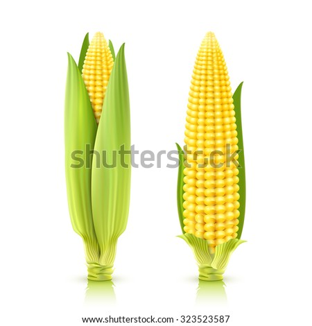 Sweet corn cobs realistic decorative icons set isolated vector illustration - stock vector