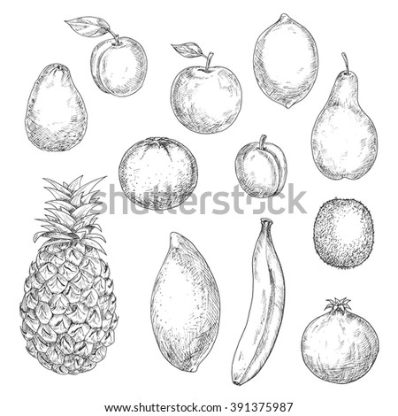 Sweet tropical pineapple and orange, banana and mango, kiwi and apple, pear and peach, avocado and lemon, pomegranate and apricot fruits. Sketches in retro style for cocktail recipe, dessert theme - stock vector