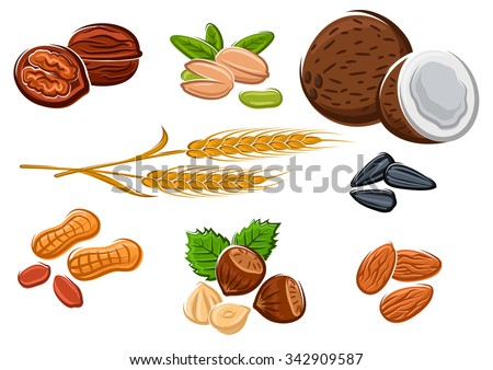 Tasty walnuts, peanuts, almonds, hazelnuts, pistachios, coconuts, sunflower seeds and wheat isolated on white, for vegetarian food and healthy snack design - stock vector