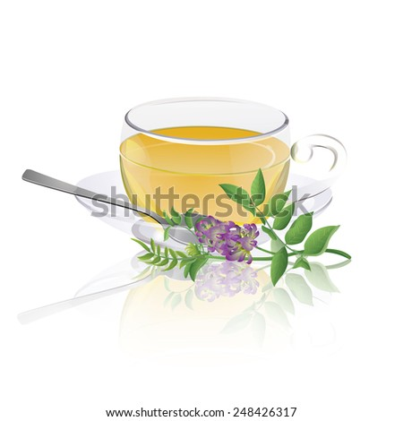 Tea cup with liqourice (Glycyrrhiza glabra) branch - stock vector