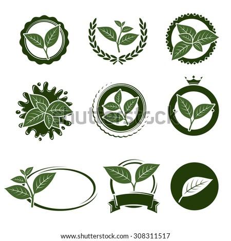 Tea leaves label set. Vector - stock vector