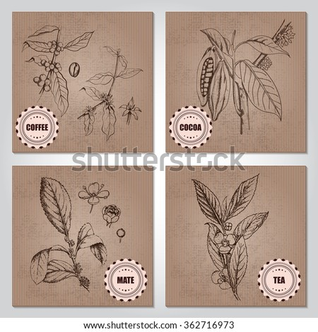Tea leaves, Mate shrub, yerba mate, flowering branch, Berries, leaves, shoots and grains of coffee, Cacao tree, cocoa tree or Theobroma cacao, leaves, fruit and branch vintage engraving on cardboard. - stock vector