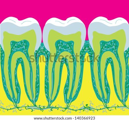 Teeth in cartoon style - stock vector