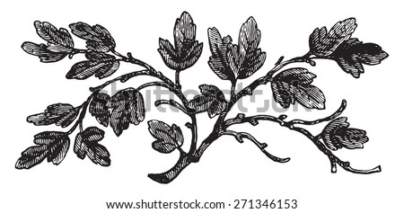 The barren fig tree, vintage engraved illustration.    - stock vector