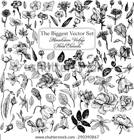 The biggest vintage vector floral set of isolated elements in Victorian style, flowers and buds, leaves and branches, ink drawing, imitation of engraving, hand drawn design elements - stock vector