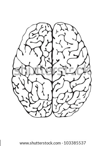 The brain is a black and white view from above - stock vector